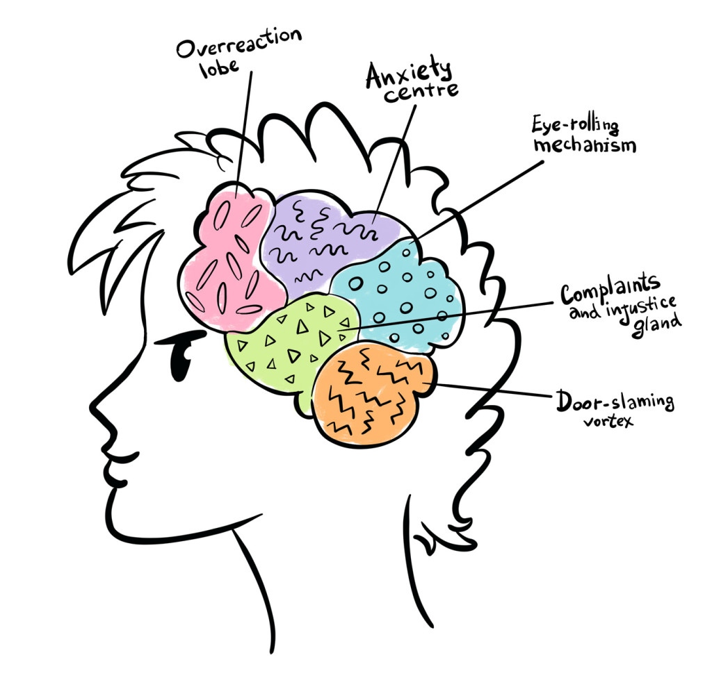 The Purpose Of Teenage Brain >> The Limbic System The Accelerator In A Teenage Brain Stephanie